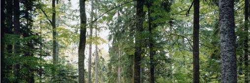 Le bois, en voie d'extinction ou alternative au pétrole?