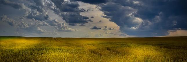 L'Agriculture raisonnée, plus adaptée que la bio?