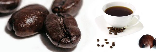 Meo. Développement durable dans le café