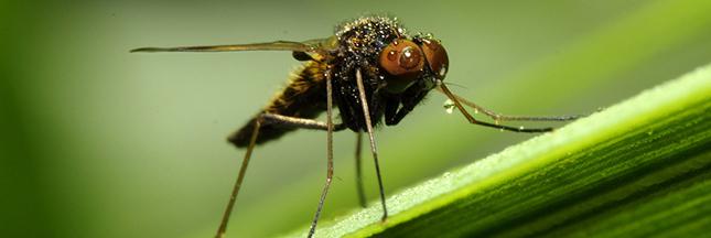 Piqûres de moustique: votre groupe sanguin vous défavorise-t-il?