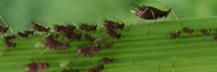 Je choisis les insecticides bio pour jardiner écologique
