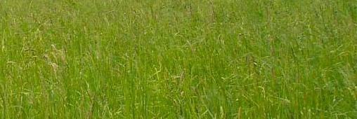 100 euros pour ne pas tondre sa pelouse