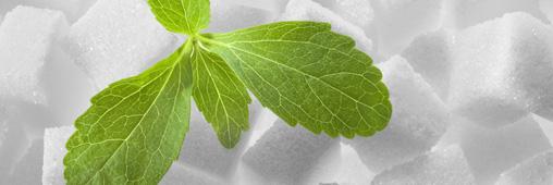 La Stevia: remède naturel contre l'hypertension