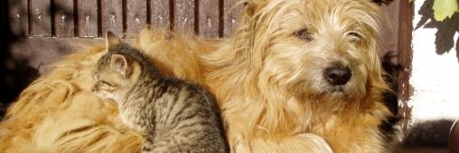 Trucs et Astuces. Eduquer et prendre soin de son chien ou de son chat