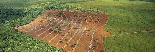 Bonne nouvelle: la déforestation en Amazonie recule