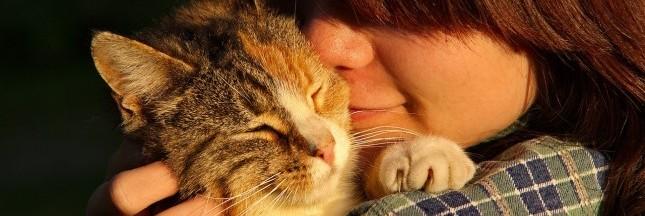 Ronronthérapie: le bien-être félin