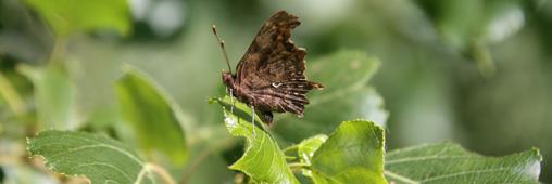 Science participative: observez les petites bêtes reines des forêts!