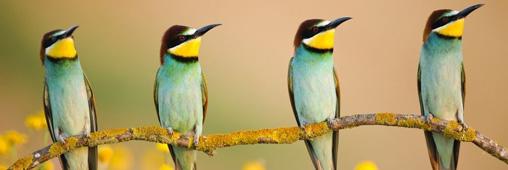Concours photo du festival de l'oiseau et de la nature: un palmarès de haut vol!