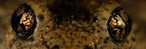 Concours photo par Nature: le projet planète grenouille l'emporte