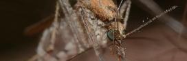 à quoi servent les moustiques