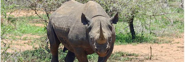 14 espèces animales disparues – DIAPORAMA