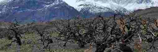 Quand la Patagonie lutte contre la déforestation