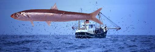 La taille de 600 espèces de poissons baisse à cause du réchauffement