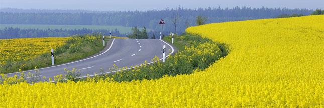 Produire des biocarburants est-il une menace écologique?