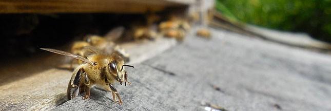 Je parraine une ruche
