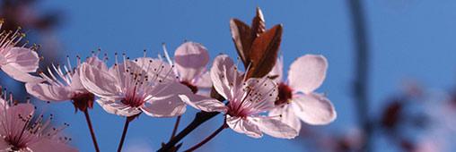 Les plus belles photos de belles plantes