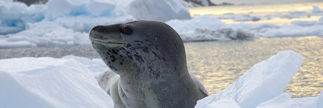 La fonte des glaces accélérée en Antarctique