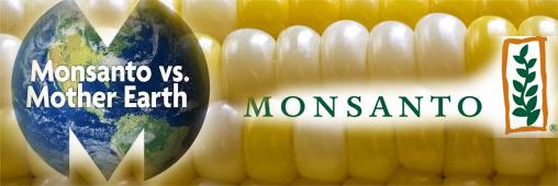 L'année «carte blanche» à Monsanto