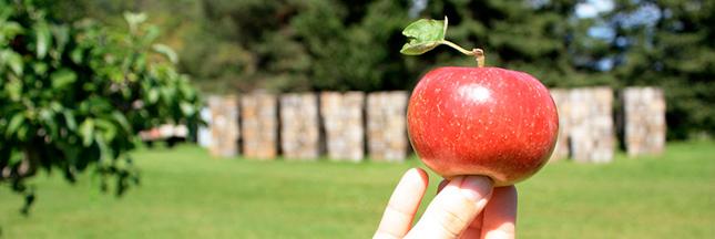 Orthorexie: l'obsession du manger sain
