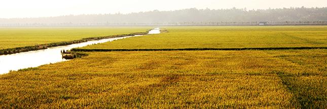 Les pesticides éliminés dans les pays en voie de développement?
