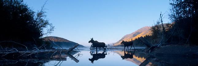 Les plus belles photos Nature de National Geographic