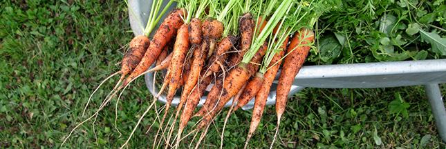 Gaspillage alimentaire: pourquoi manger des légumes inesthétiques
