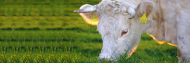 La viande bio peut-elle faire la différence?