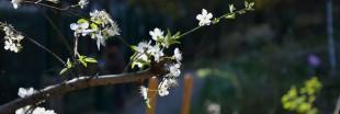 Reportage : agriculture parisienne en jardin partagé