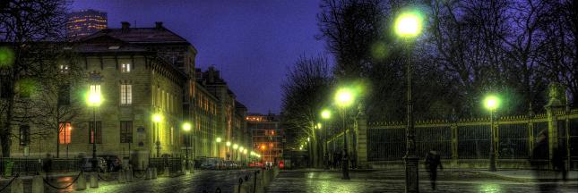 Bientôt des arbres phosphorescents pour éclairer nos rues?