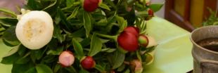 Amapola, des fleurs en circuit-court (vidéo)