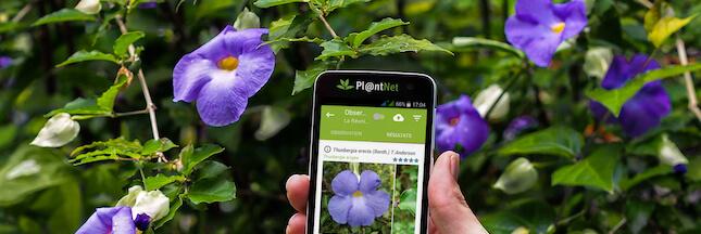 Pl@ntNet, une appli pour reconnaitre les plantes en un clic