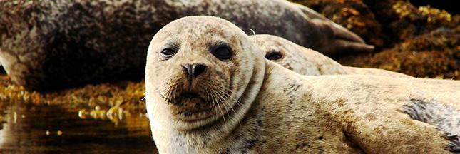 Aidez les animaux, ramassez du plastique avec les Initiatives Océanes de Surfrider [en photos]