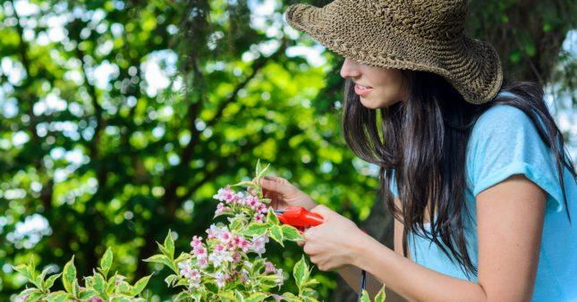 Soins naturels: cultivez votre beauté… avec les fleurs de votre jardin