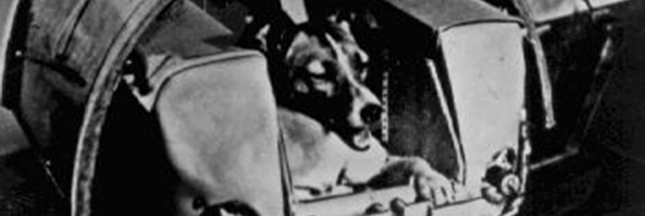 10 animaux qui ont marqué l'Histoire