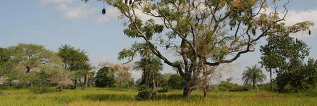 Le zircon: ce précieux minérai qui divise le Sénégal