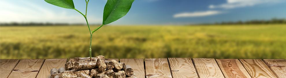 La biomasse, une source d'énergie durable