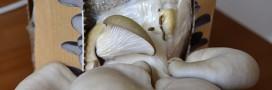 faire pousser des champignons à la maison