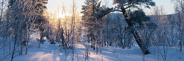 Fascinant voyage d'hiver en Laponie suédoise
