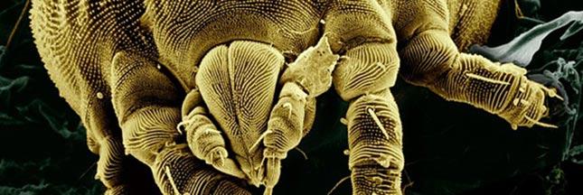 10 astuces naturelles contre les acariens: la fiche pratique