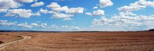 Sols : l'agroforesterie, la révolution urgente à mener