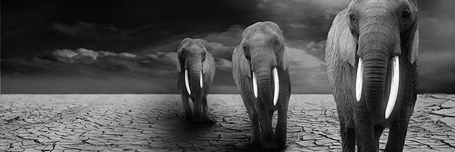 Le commerce de défenses de mammouths freinera-t-il le massacre des éléphants?