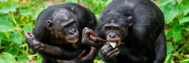 Le moine et le bonobo: d'où vient l'altruisme chez l'homme?