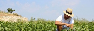 Découvrez Groww : l'application pour les jardiniers heureux