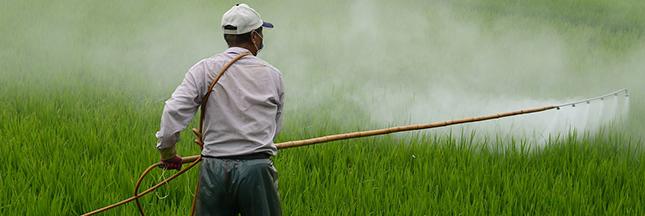 Exposition aux pesticides: plus d'un million de personnes touchées, réglementation inefficace