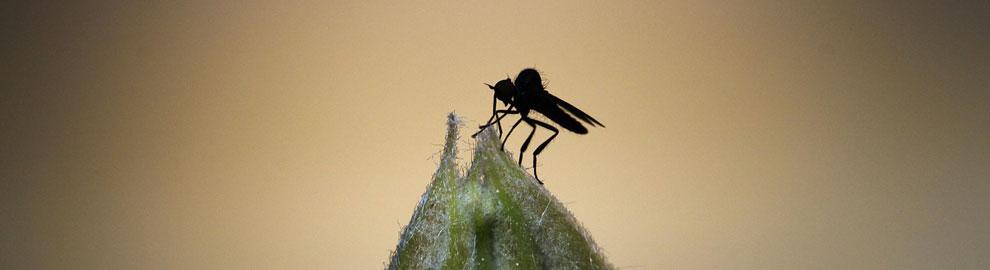 Chassez les insectes de la maison