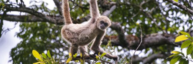 11 espèces en voie de disparition imminente
