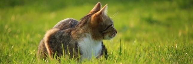 Pour sauver les animaux, enfermez vos chats