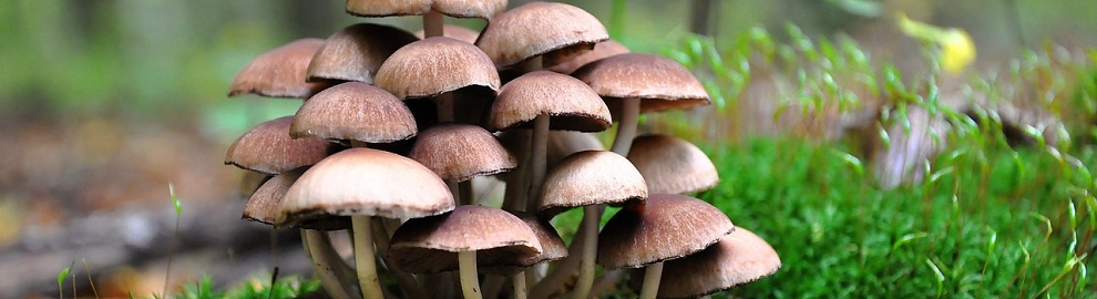 Les mille vertus du champignon