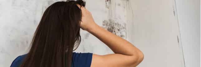 Comprendre les moisissures dans votre habitat pour mieux les combattre