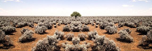 L'accaparement des terres fertiles continue